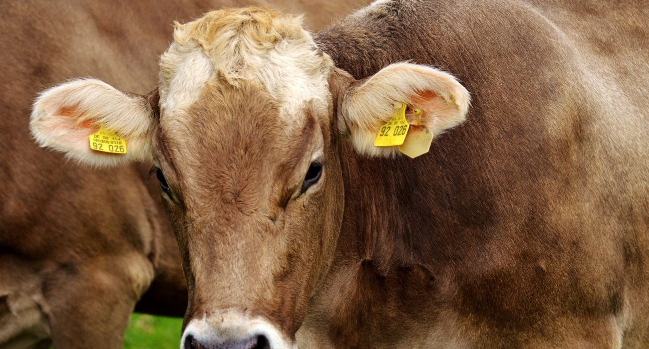 Landwirtschaft Verbraucherschutz